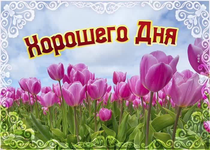 Открытка картинка хорошего дня с тюльпанами