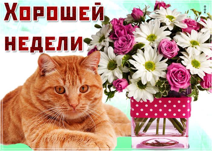 Открытка картинка хорошей недели с котиком