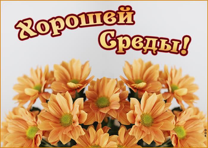Картинка картинка хорошей среды с цветами