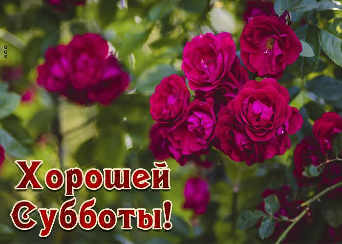 Картинка картинка хорошей субботы с цветами