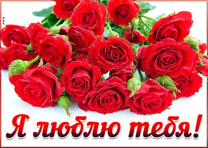 Картинка картинка люблю с букетом роз