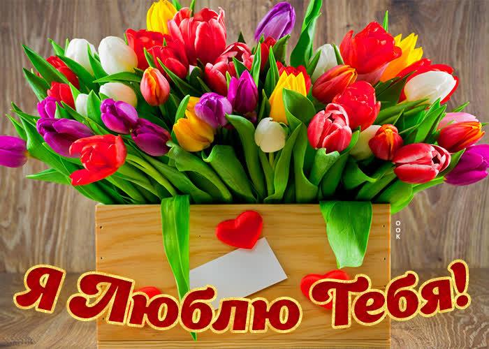 Картинка картинка люблю с тюльпанами