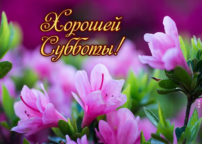 Открытка картинка с субботой с цветами
