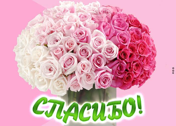 Открытка картинка спасибо с розовыми розами