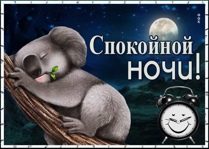 Картинка картинка спокойной ночи с коалой