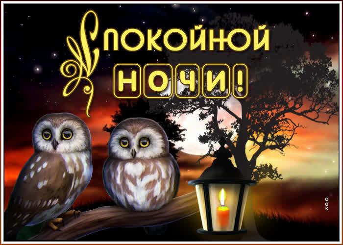 Картинка картинка спокойной ночи с птичками
