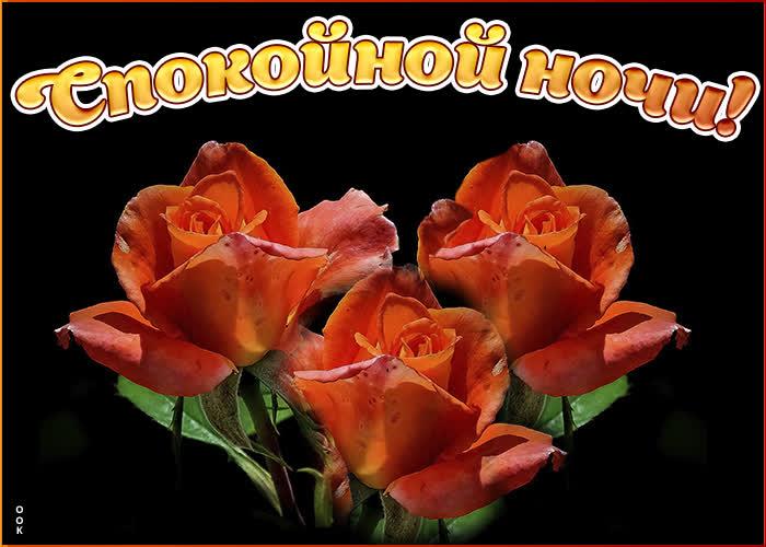 Картинка картинка спокойной ночи с розами
