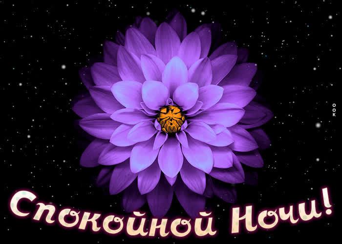Открытка картинка спокойной ночи с ярким цветком