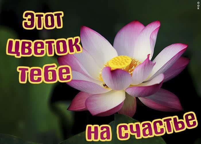 Открытка картинка цветок тебе на счастье