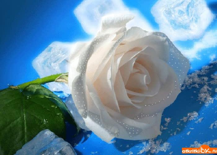 Картинка классная роза