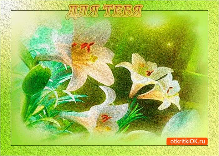 Открытки лилии для тебя