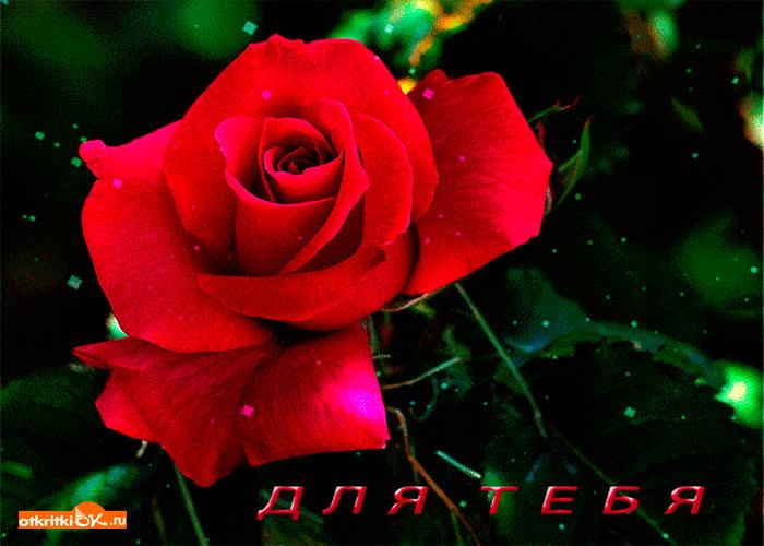 Картинка маленькая роза для тебя