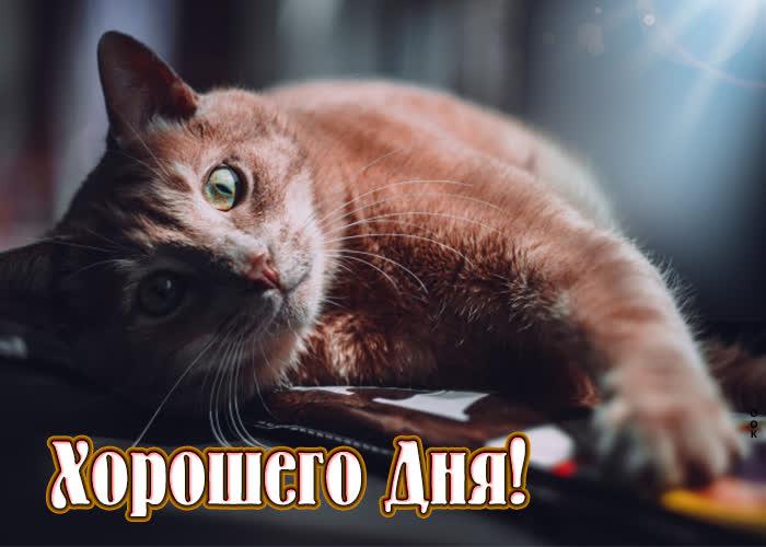 Картинка милая картинка хорошего дня с котиком