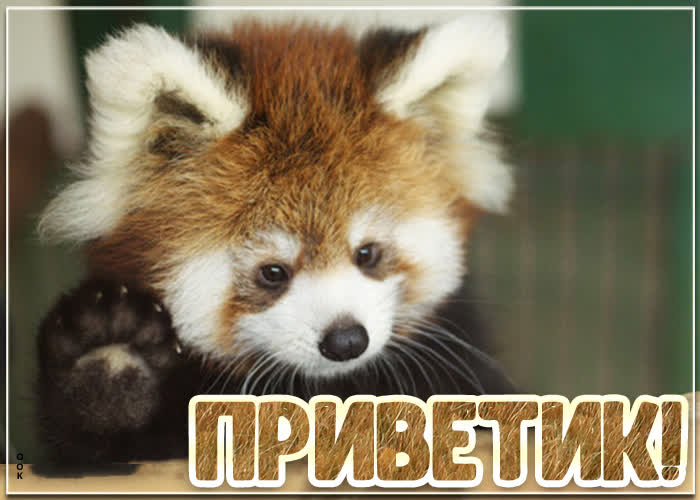 Открытка открытка приветик с котиком
