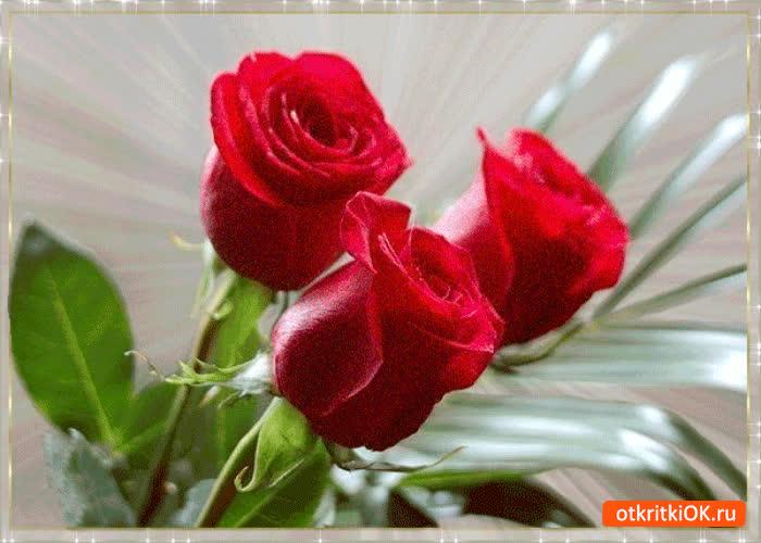 Картинка милый букетик роз я тебе дарю
