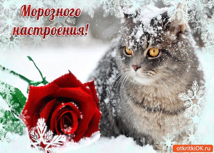 Зимние картинки с надписями прикольные хорошее настроение