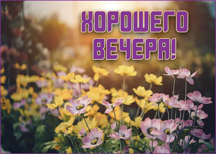 Картинка нежная картинка хорошего вечера с цветами