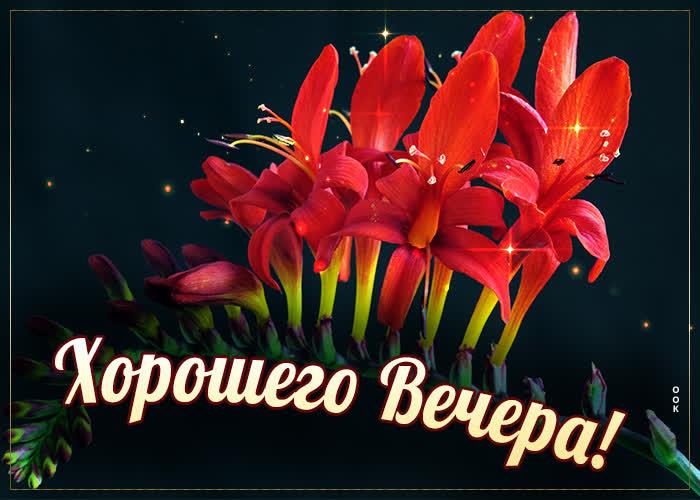 Картинка новая картинка хорошего вечера с цветами