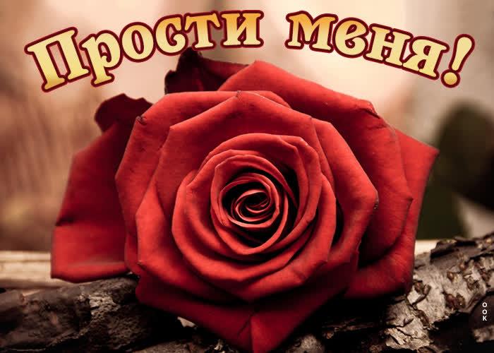 Картинка новая картинка прости меня с розой