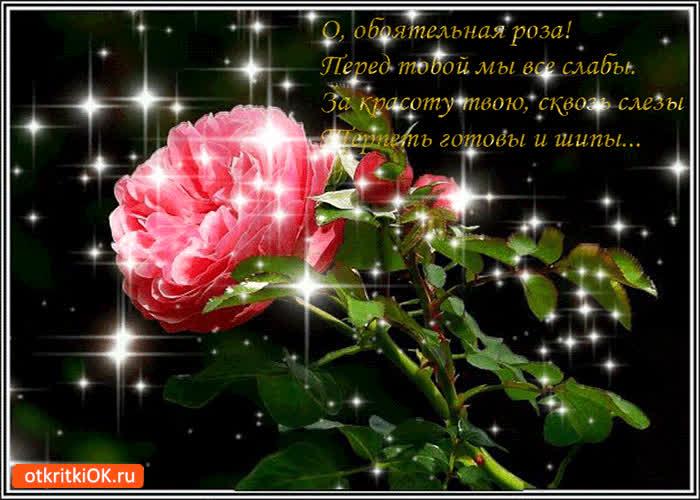 Картинка обаятельная роза для тебя