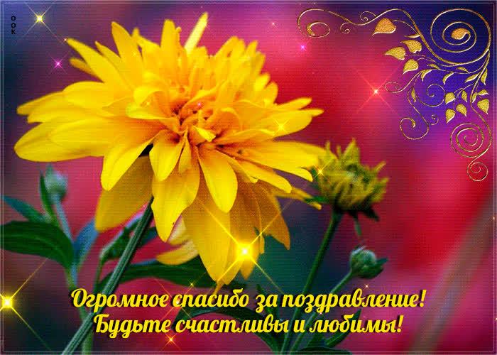 Открытка Огромное Спасибо За Поздравление - Скачать бесплатно на  otkritkiok.ru