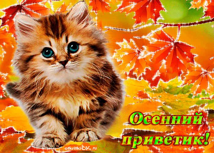 Смешные собачки, осенний приветик картинки с кошками