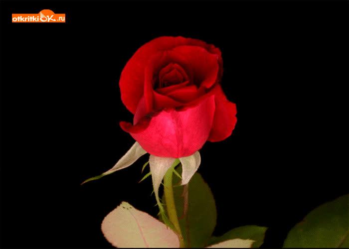 Картинка картинка с розой для тебя
