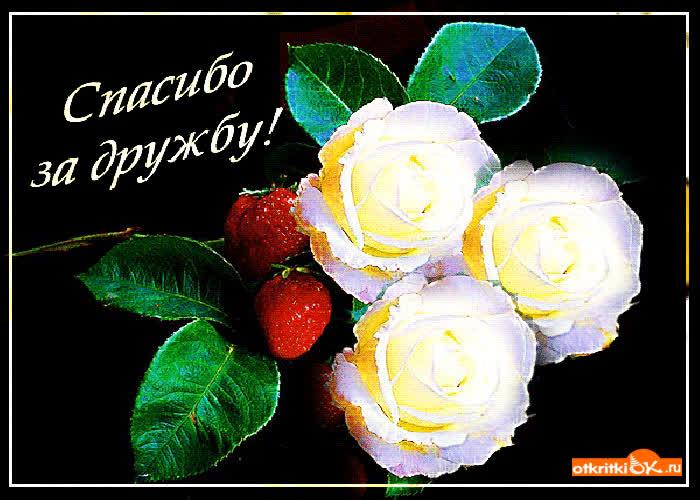 Открытки с цветами за дружбу