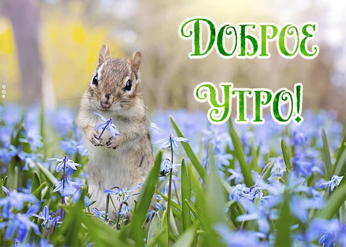 Открытка открытка доброе утро с природой