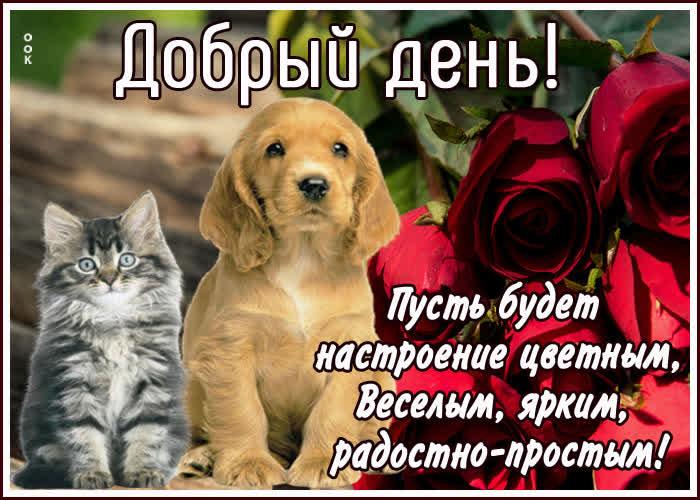 Картинка открытка добрый день друзья