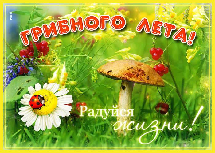 Картинка открытка лето с надписью