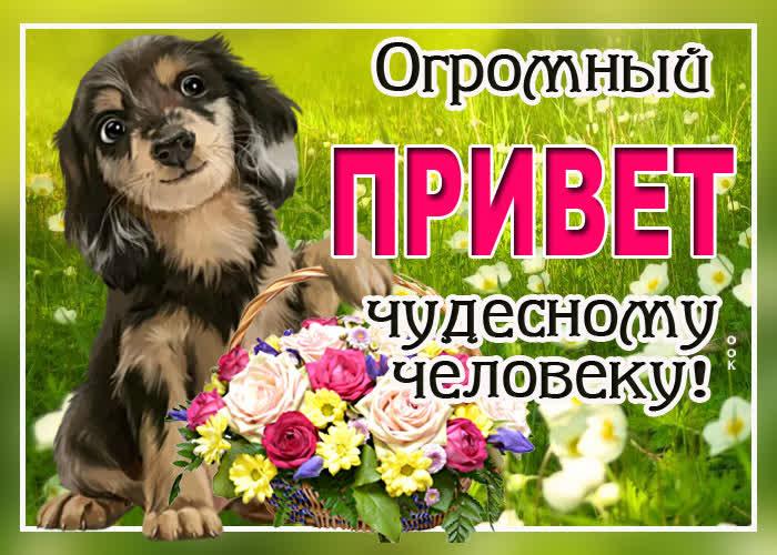 Картинка открытка привет чудесному человеку