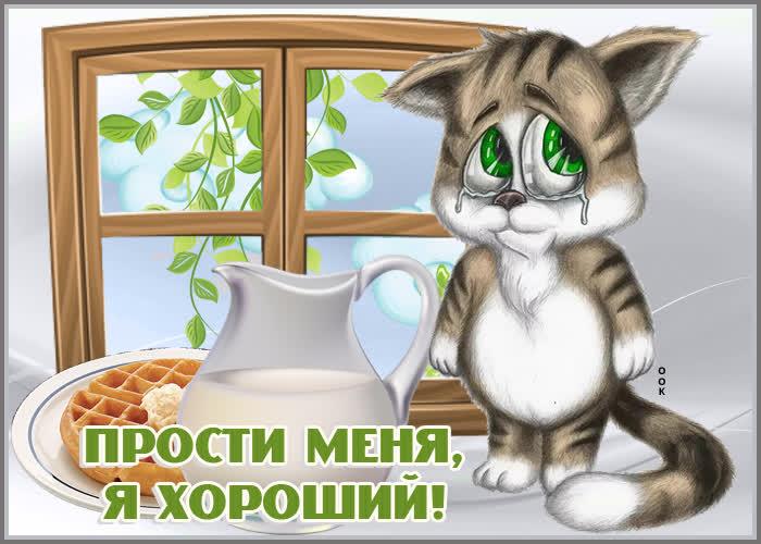 Открытка открытка прости с котиком