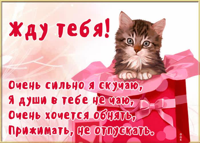 Картинка открытка жду с котиком