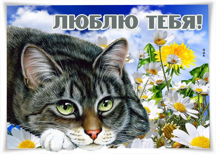 Открытка прикольная открытка люблю тебя