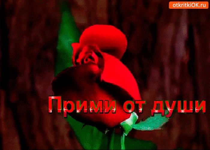Картинка прими розу от души