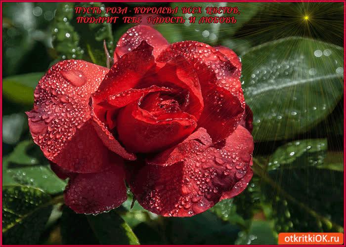 Картинка пусть эта роза подарит счастья и любви