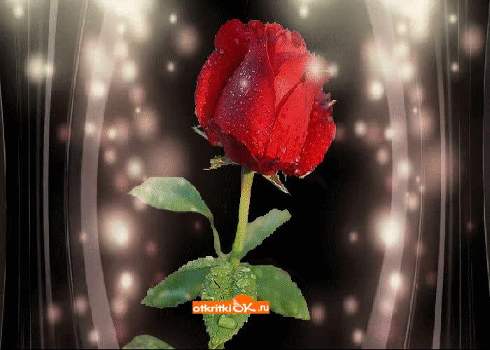 Картинка роза бесплатно
