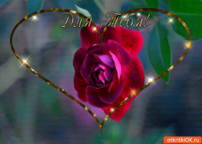 Картинка роза чудесная для тебя