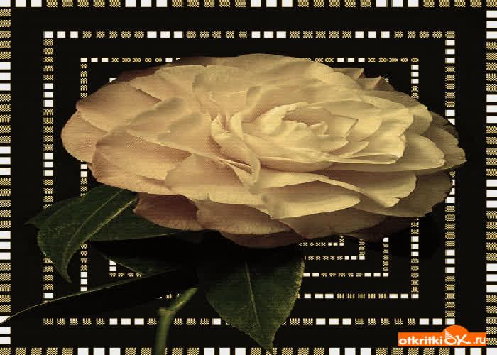 Картинка роза gif анимация