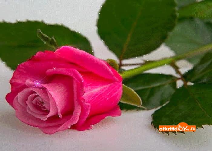 Картинка роза gif