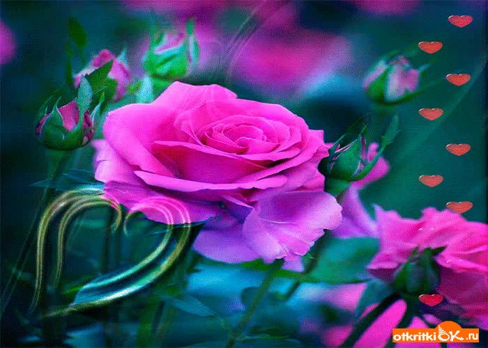 Картинка роза любви для тебя