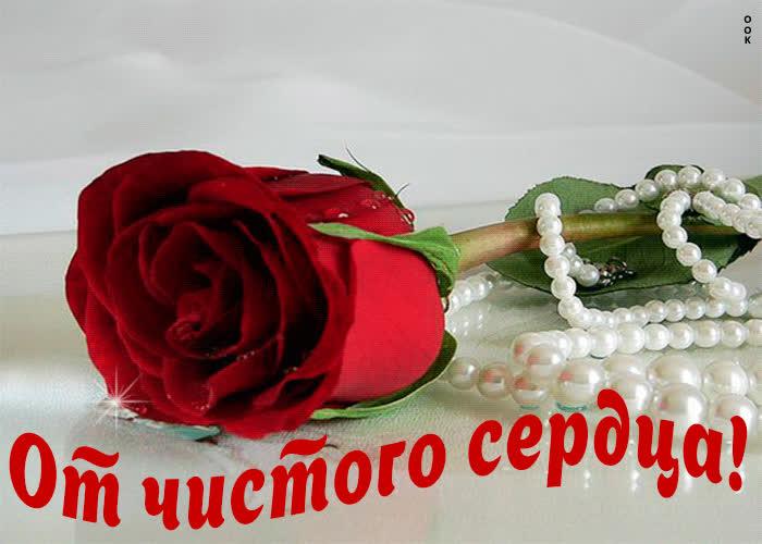Картинка роза от чистого сердца