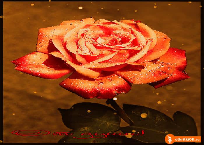 Картинка роза от души