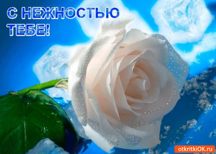 Картинка роза с нежностью тебе