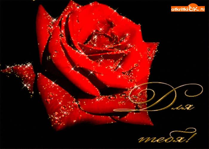 Картинка роза в темноте