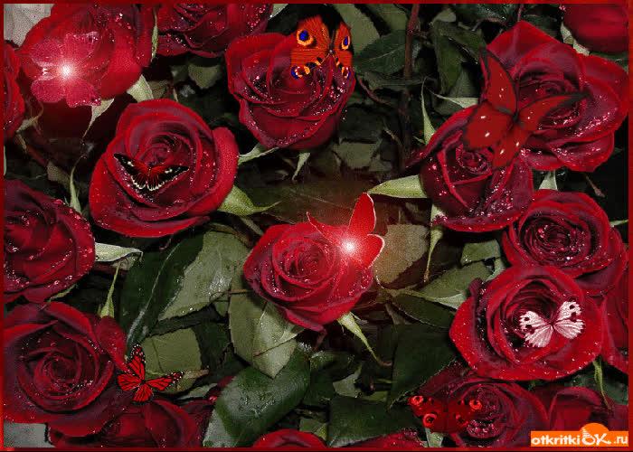 Живые открытки с днем рождения розы