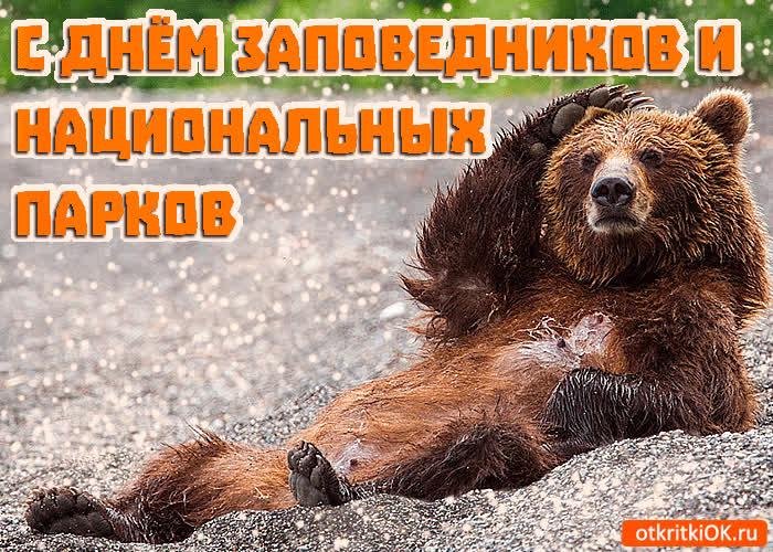 Открытка к дню заповедников и национальных парков, кошками. прикол открытка