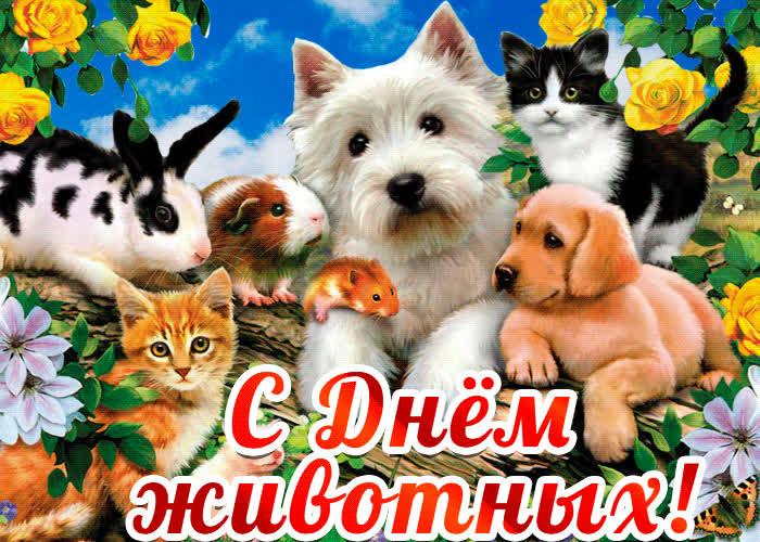 открытка день животных него появилась идея