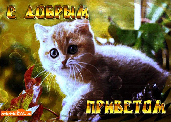 Поздравление днем, всем привет живые открытки